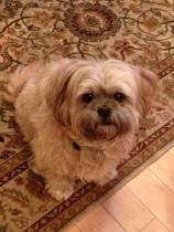 Thamman's dog Dixie